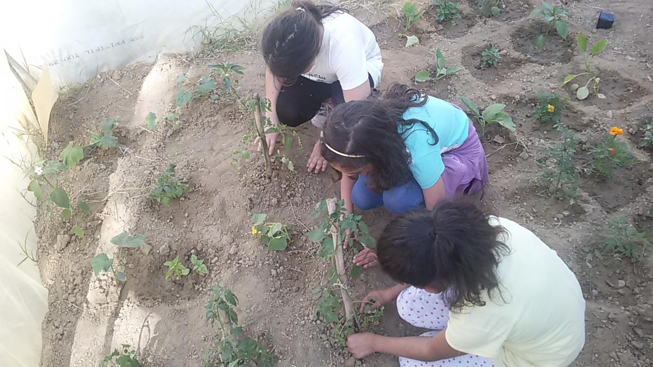 Ο Λαχανόκηπος του Σχολείου μας