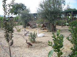 Φάρμα Πολυζωγόπουλου